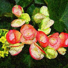 "фото ""New Begonias"""