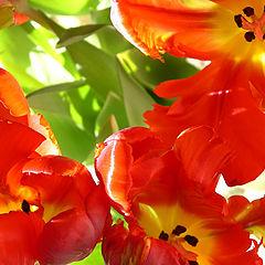 "photo ""Born under spring sun"""