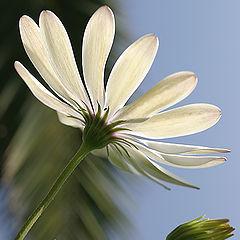 "album ""Flowerы"""