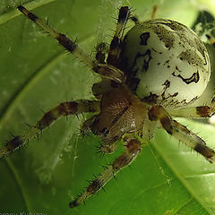"""photo """"Spider"""""""