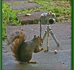 """photo """"Awwww Nuts !"""""""