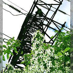 """photo """"High-voltage flowering"""""""