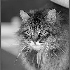 """фото """"Просто уличный Кошак"""""""