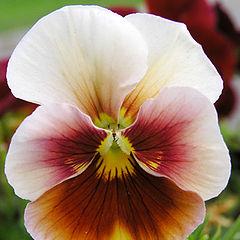 """album """"Flowering"""""""