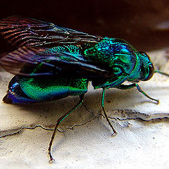 """photo """"African fly"""""""