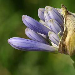 """фото """"Little flower"""""""