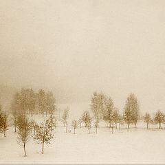 "photo ""Snowstorm"""