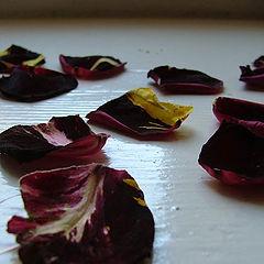 """фото """"Dry petals of roses"""""""
