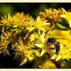 """photo """"Killa bee"""""""