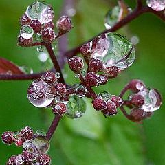 "photo ""Scenes in raindrops"""