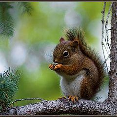 """фото """"А орешки не простые..."""""""