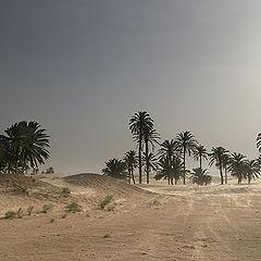"""фото """"Безмолвная пустыня"""""""