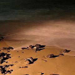 """фото """"Камни ползущие в море."""""""