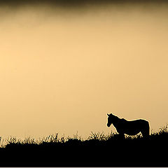 """photo """"Horse in the mountain"""""""