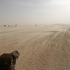 "фото ""Навстречу Пустыне"""