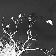 "photo ""The Birds"""