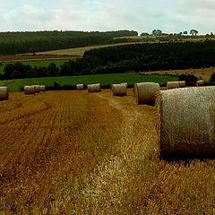 """photo """"a summer field"""""""