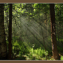 """photo """"forest..."""""""