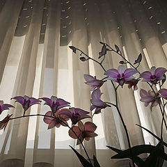 """photo """"Orchid on the window"""""""