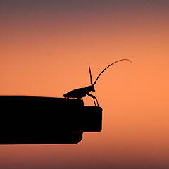 """photo """"El insecto..."""""""