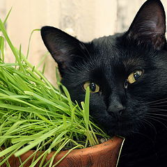 """photo """"You Thought Cat Don't Like Grass, Don't You? ;-)"""""""