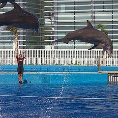 """фото """"Летающие дельфины"""""""