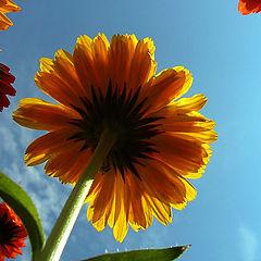 """фото """"Цветы на небе"""""""
