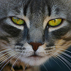 "photo ""Look into my eyes...."""