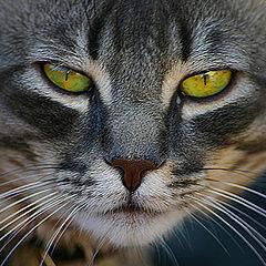 "фото ""Look into my eyes...."""