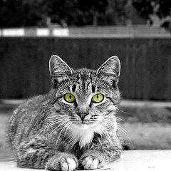 """фото """"Из клана кошачьих"""""""