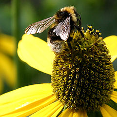 "фото ""Пчелка"""