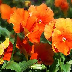 "album ""Flower kaleidoscope"""