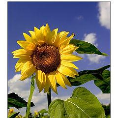 """фото """"sunfleur"""""""