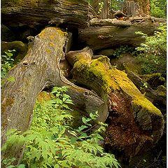 "photo ""Deep forest"""