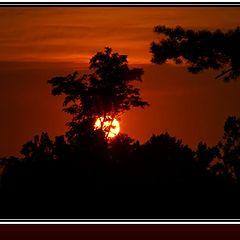 """photo """"Sun"""""""