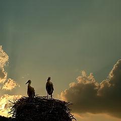 """фото """"Последний миг уходящего дня"""""""