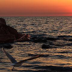 """фото """"wasted sunrise...."""""""