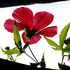 """фото """"цветок"""""""