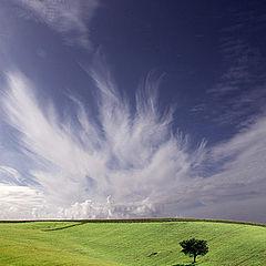 "photo ""Alone tree"""