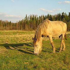 """фото """"Конь"""""""