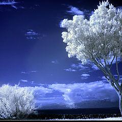 """фото """"tree in IR (Ana de Sousa)"""""""