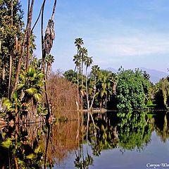 """photo """"Los Angeles County Arboretum ."""""""