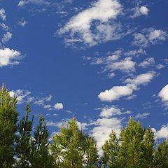 """фото """"Sunny Day"""""""