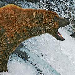 "photo ""Classical Bear"""