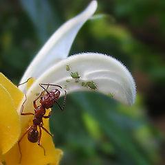 "фото ""Ant"""