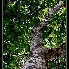 "photo ""Tree or Giraffe? :))"""