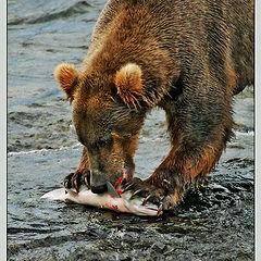 """photo """"Bear's Meal"""""""