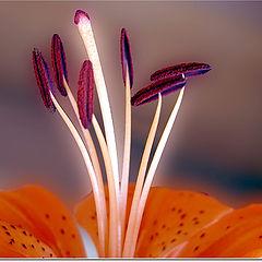 """photo """"Luminous Stamens"""""""