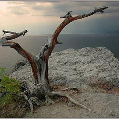 "photo ""Krimea's Snag"""