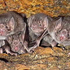 "photo ""Bats"""